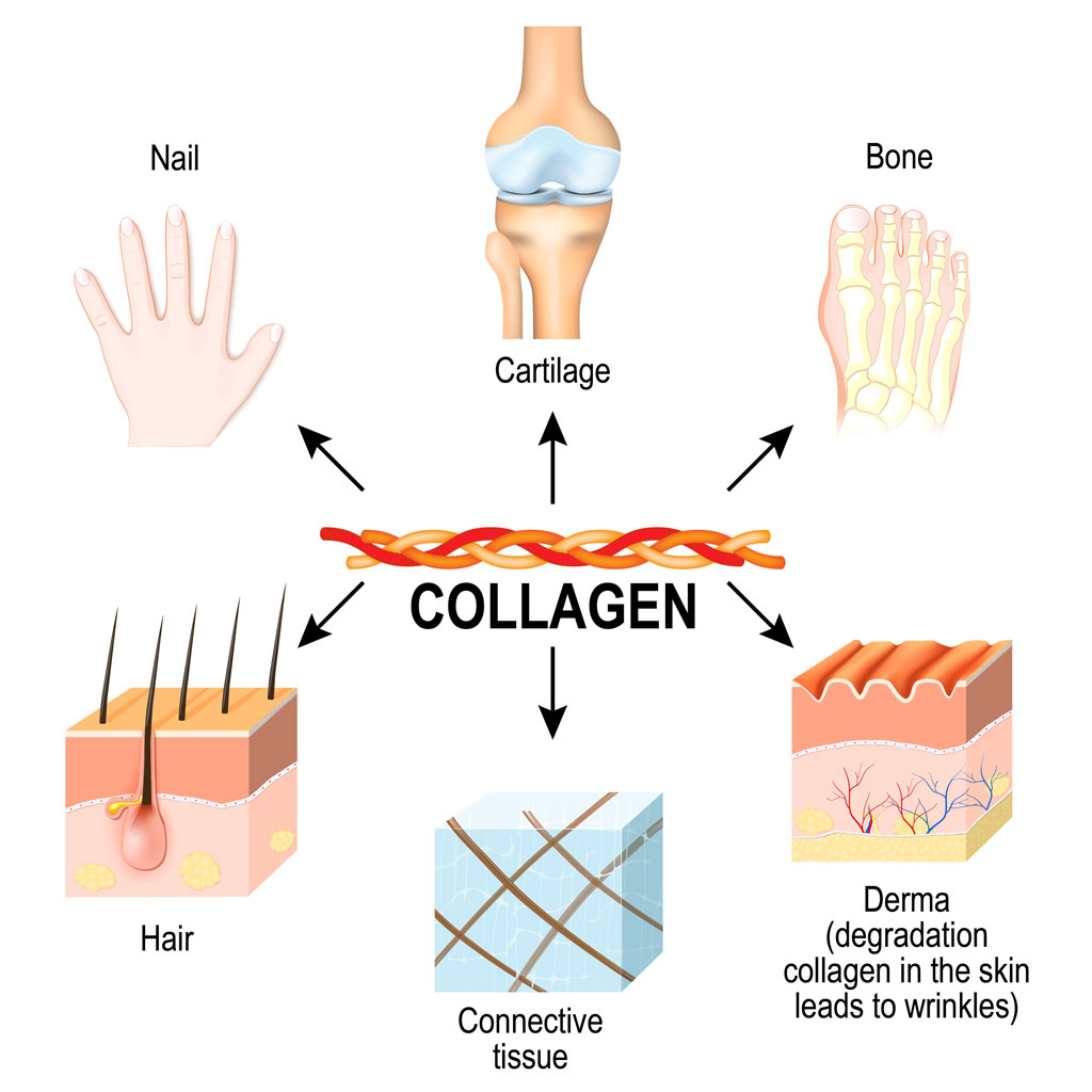 why marine collagen diagram